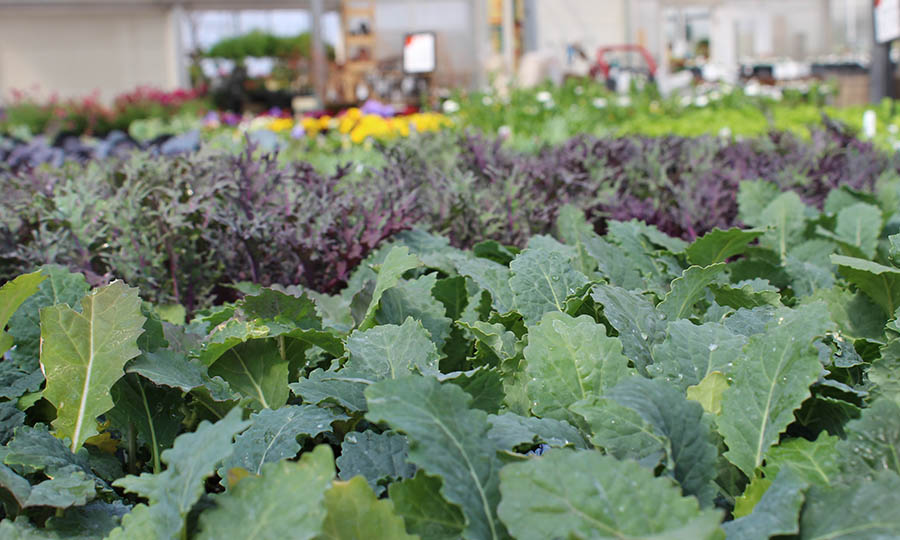 Vegetables to plant